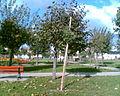 Na józefowskim rynku - panoramio.jpg