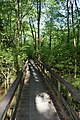 Natchez Trace Trail in Mississippi 2.jpg