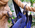 National Aviary (13020409664).jpg