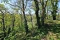 Natur am Schloss Wildenfels. 2H1A8826WI.jpg