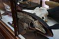 Natural History Museum, Dublin. (6915992957).jpg