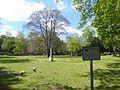 Naturdenkmal Blutbuche auf dem St.-Johannis-Kirchhof-001.jpg
