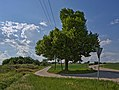 Naturdenkmal Linde in den Schloßwiesen, Nebringer Straße, Jettingen-Sindlingen, Kennung 81150530009, von Süden.jpg