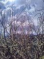 Nature Almora.jpg