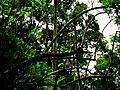 Natureza - panoramio - Alexandre Possi (3).jpg
