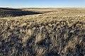 Near Salt Creek - Flickr - aspidoscelis (1).jpg