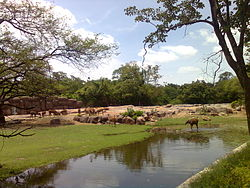 Nehru Zoo Hyderabad 1119.jpg