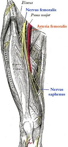 Nervus femoralis