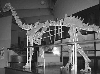 Neuquensaurus - Restored skeleton of N. australis