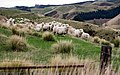 New Zealand - Rural landscape - 9850.jpg