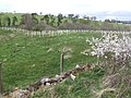 New plantation - geograph.org.uk - 408813.jpg