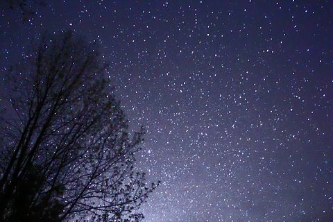 The night sky with stars viewed behind the silhouette of a tree bare of leaves.
