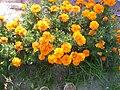Nischni Nowgorod PD 2010 075.JPG