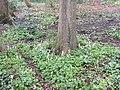 Noorderplantsoen Gasthuizen Stinzenflora 22 35 36 785000.jpeg