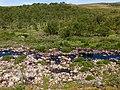 Norway Finnmark River P1290527.jpg