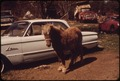 OBSOLESCENCE IN THE JUNKYARD - PONY OR AUTO^ - NARA - 550005.tif