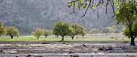 Oak Trees - Dasht-e-Barm Near Kazerun - panoramio.jpg