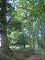 Oak avenue, Ritson - geograph.org.uk - 210808.jpg