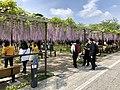 Okazaki-Park-Fujimatsuri-4.jpg