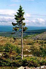 trädarter i världen