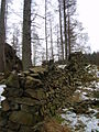 Old Wall, Claife Woods - geograph.org.uk - 1160299.jpg