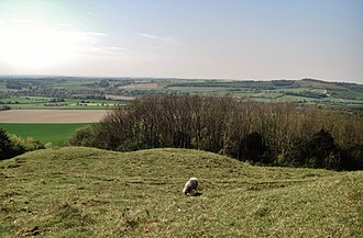 Old Winchester Hill - Three of the barrows situated outside of the western entrance to the hillfort.