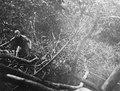 Olga Nordenskiöld i urskogen på vägen till Huari-indianerna. Sydamerika. Brasilien - SMVK - 005618.tif