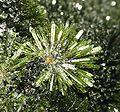 Olivenite-mrz279b.jpg