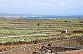 Opuntia fields - Guatiza.JPG