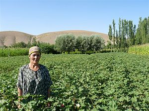 Organic cotton farmer i Kyrgyzstan (Source: He...