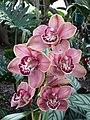 Orquídea-1.jpg