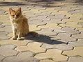 Oye-eyed cat.jpg
