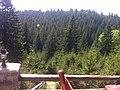 Păltiniș 550001, Romania - panoramio (3).jpg