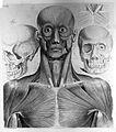 """P. Mascagni, """"Anatomia per uso..."""", 1816 Wellcome L0013275.jpg"""