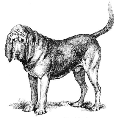 PSM V40 D253 The bloodhound champion cromwell.jpg