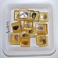 Paleoclim-rec shells 50 hg.jpg