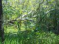 Parc-nature du Bois-de-l-ile-Bizard 50.jpg