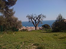 Vue d'un arbre sur une colline herborée avec la mer en fond.