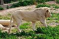 Parc animalier, Friguia, Tunisie, 25 décembre 2015 DSC 1862.jpg