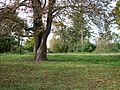 Park stadniny w Kisielnicy.JPG