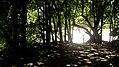 Parque Gallineral G.jpg