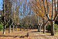 Parque del Oeste Madrid.jpg
