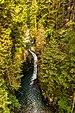 Parque del cañón Lynn, Vancouver, Canadá, 2017-08-14, DD 11.jpg