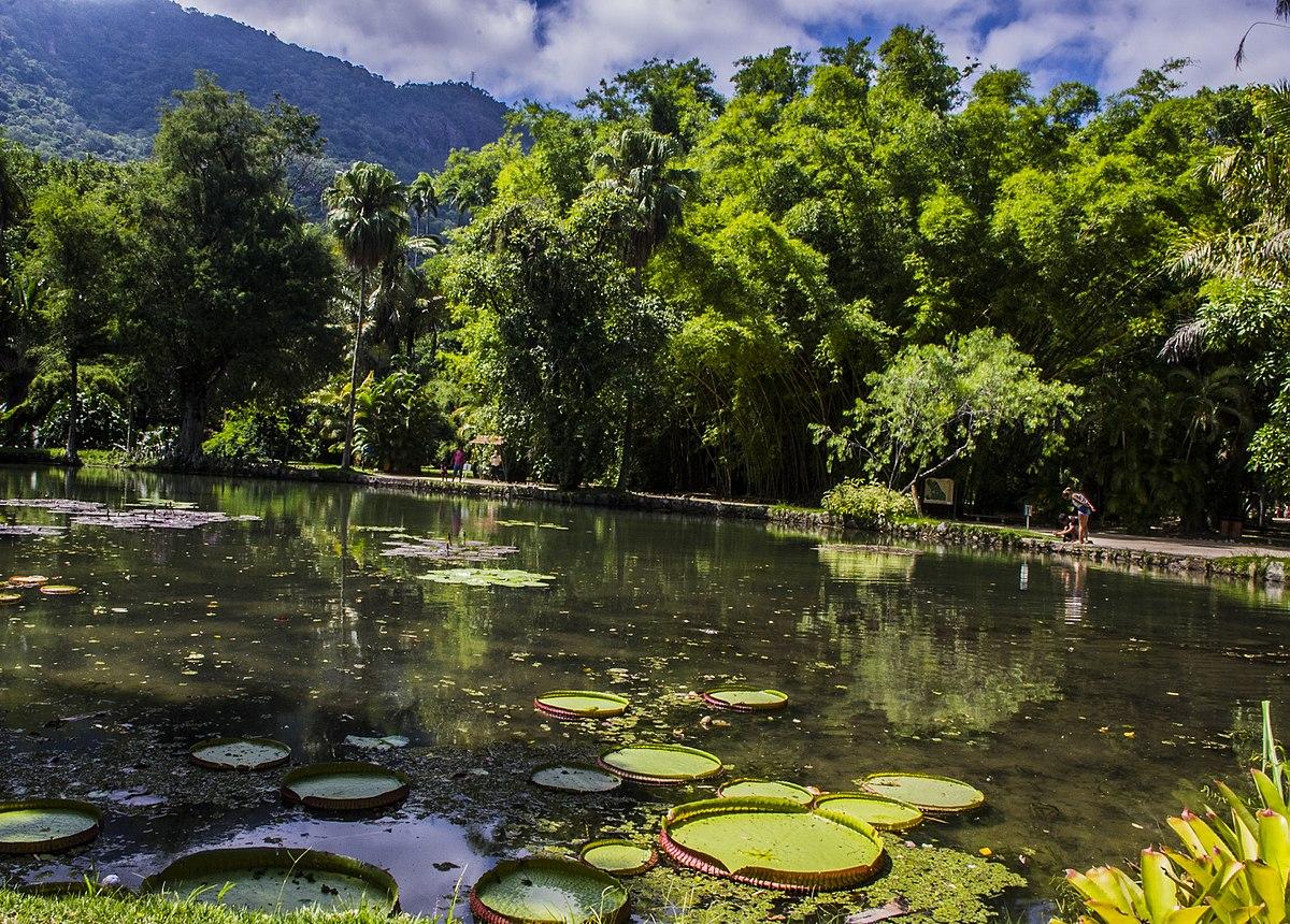 Parque nacional de tijuca.jpg