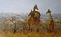 Past umfolosi giraffe.jpg