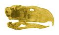 Patagornis marshi.png