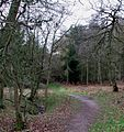Path into Buttermilk Wood near Lowe's Wood - geograph.org.uk - 311246.jpg