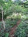 Path into Hardley Wood - geograph.org.uk - 1425506.jpg