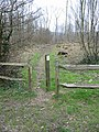 Path through Earley Wood - geograph.org.uk - 341130.jpg