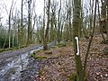 Path through a wood, with white screw-on handle - geograph.org.uk - 1740594.jpg